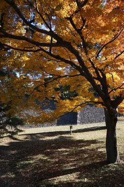 木々の色付きがとてもきれい