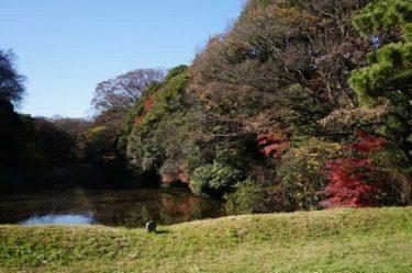 江戸城 皇居乾通り一般公開 紅葉を見てきました