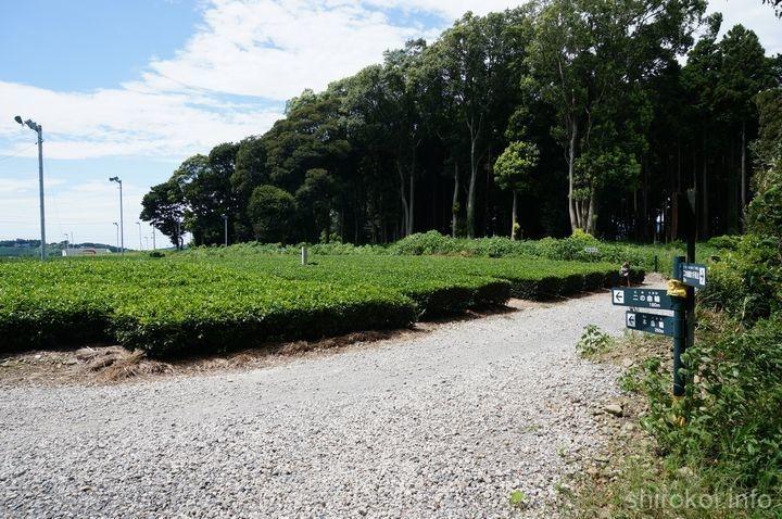 諏訪原城 茶畑