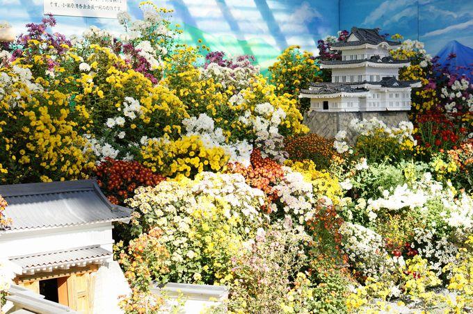 小菊総合花壇