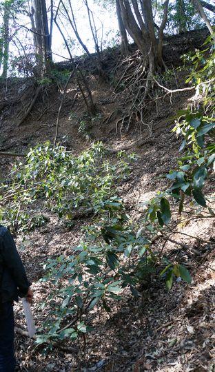三ノ曲輪手前の堀 堀底から撮影