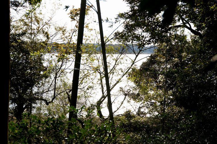 木々の合間から見える牛久沼