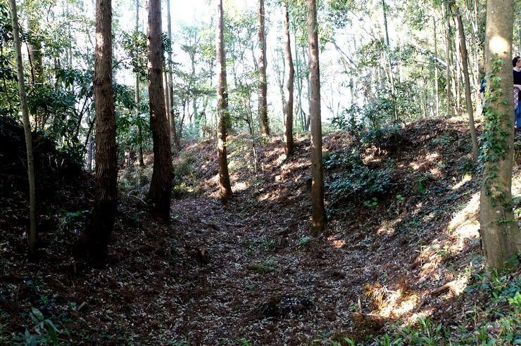 堀の斜面に映える曲がった木