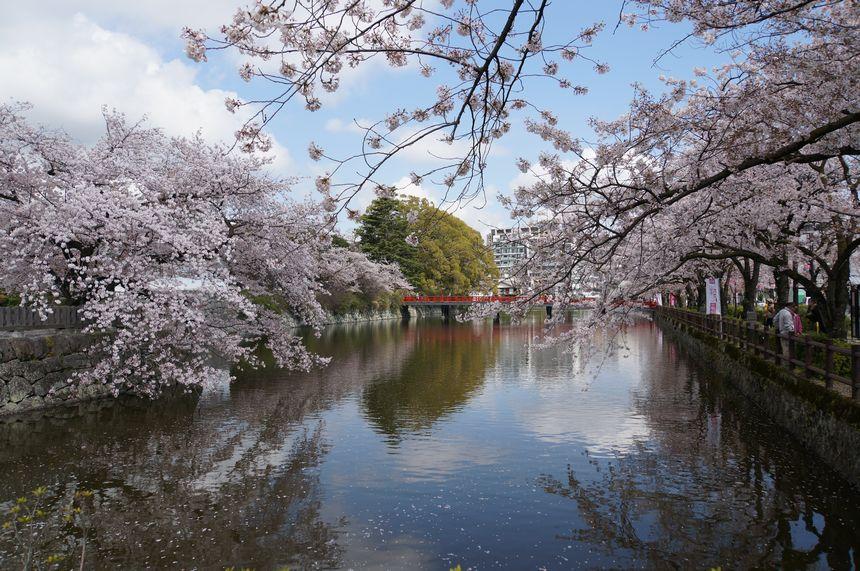 小田原城 お堀と桜
