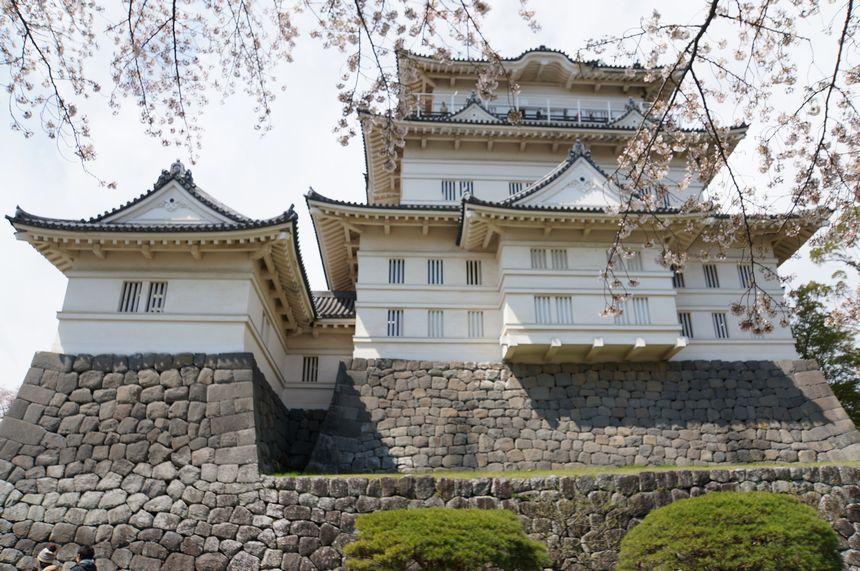 小田原城の天守と桜