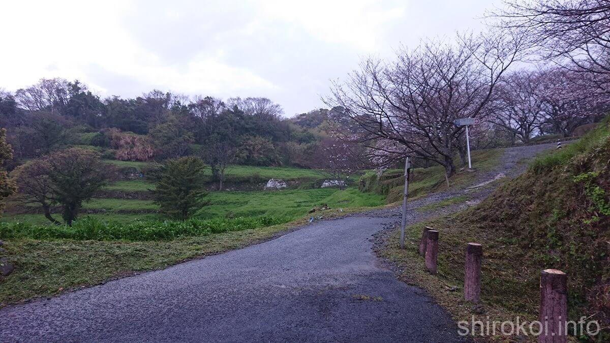 早朝の日野江城