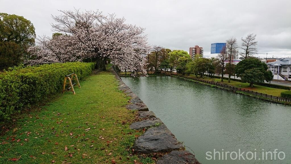 八代城 堀を縁取る桜